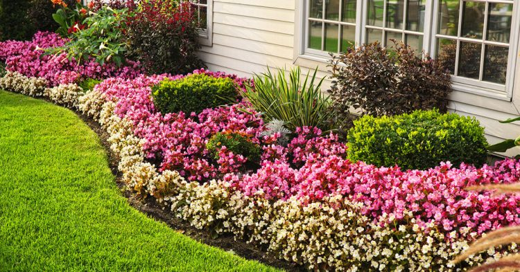 Garden Care Tips for Fall In Northern VA