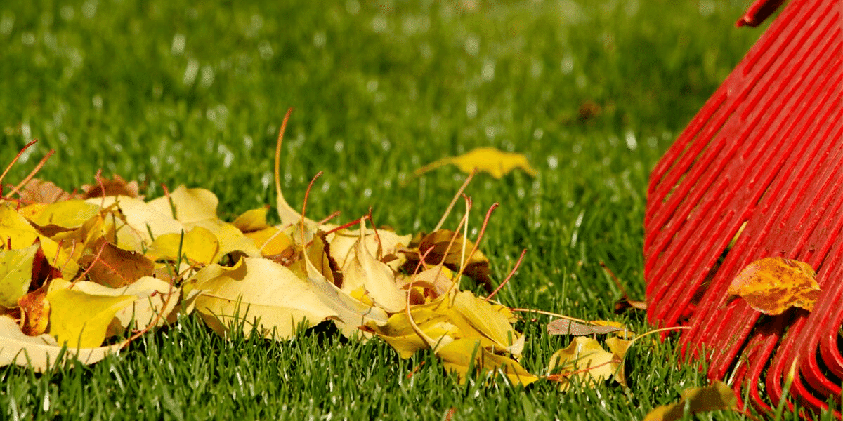 Fall Landscaping Ideas Stafford Best Lawn Care Services