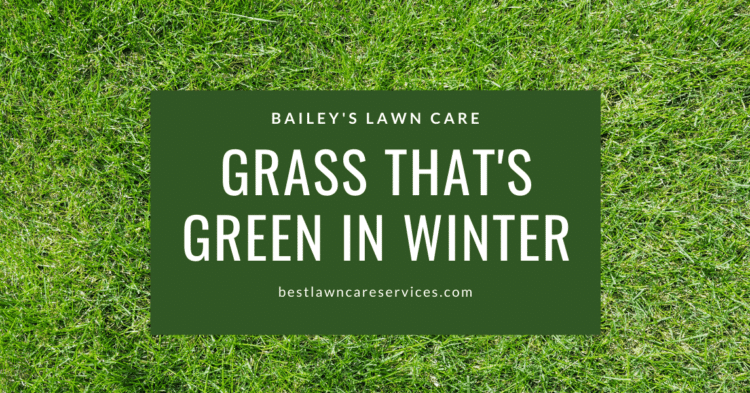 Grass That's Green In Winter