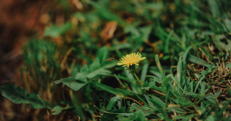 How to Prevent and Kill Weeds