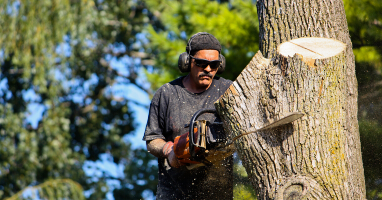 Should you Hire a Tree Removal Service?