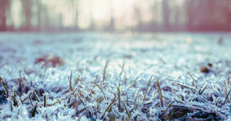 Maintaining A Healthy Lawn In The Winter