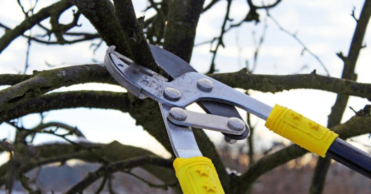 Pruning Trees in Winter