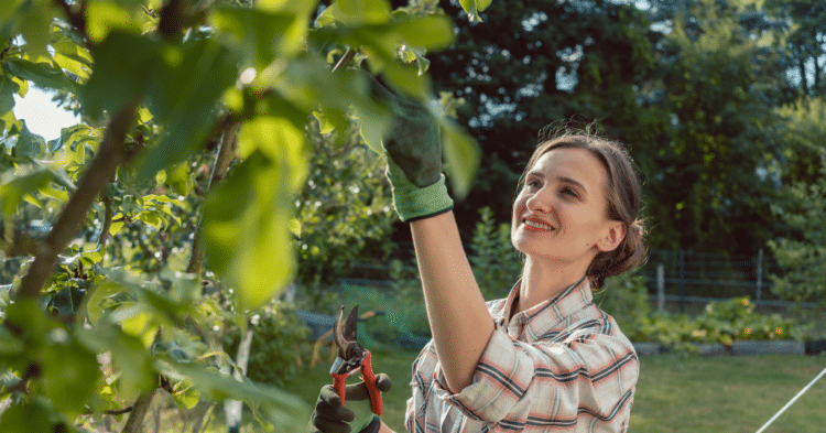 Should I Prune my Fruit Tree in the Summer?